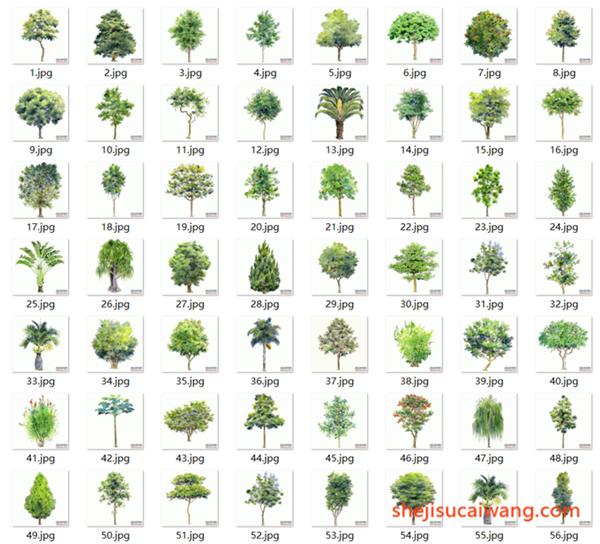 百棵手绘树木