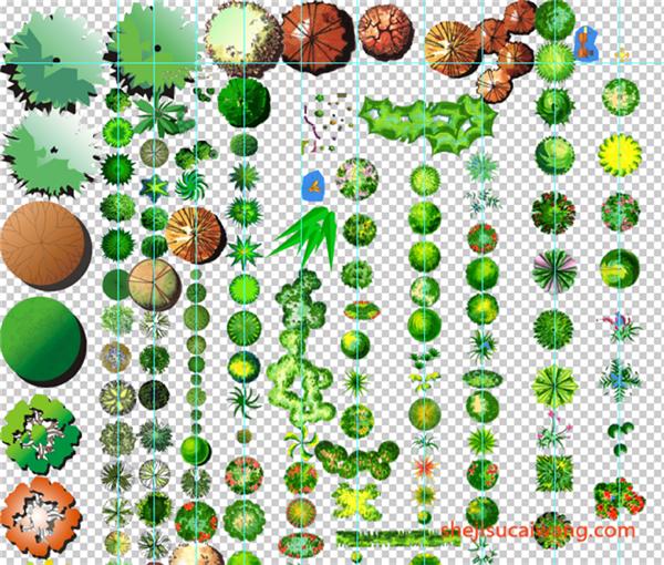 PSD手绘植物合集
