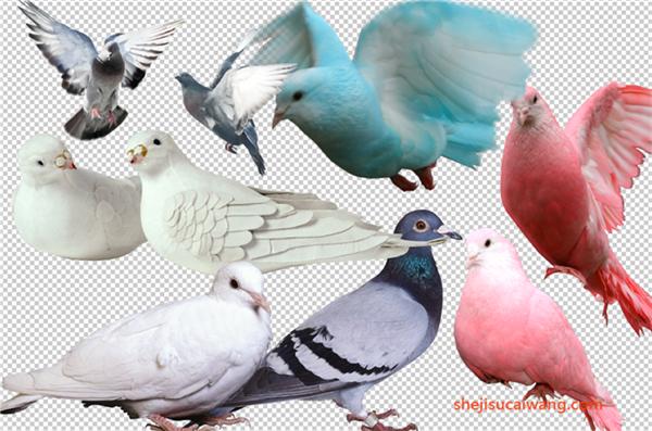 鸟类PSD分层素材
