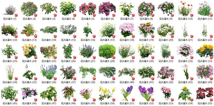 08花卉灌木SU模型