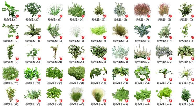 11绿色灌木SU模型
