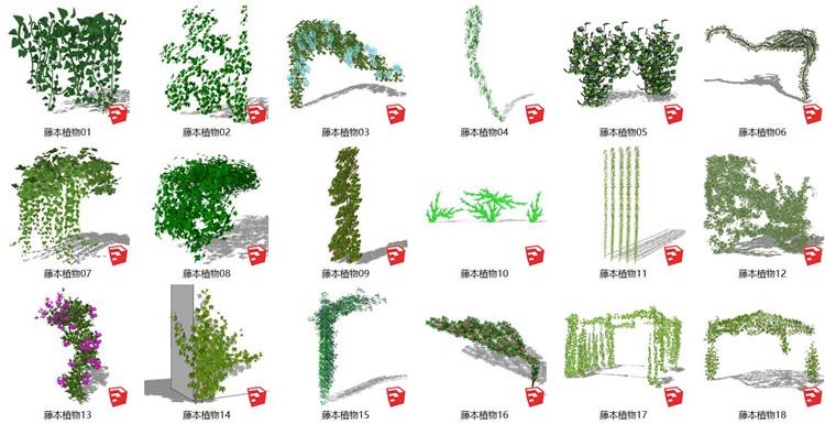 11藤本植物SU模型