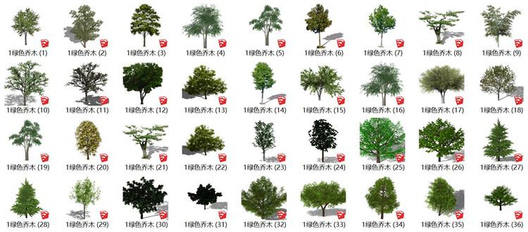 12绿色乔木SU模型