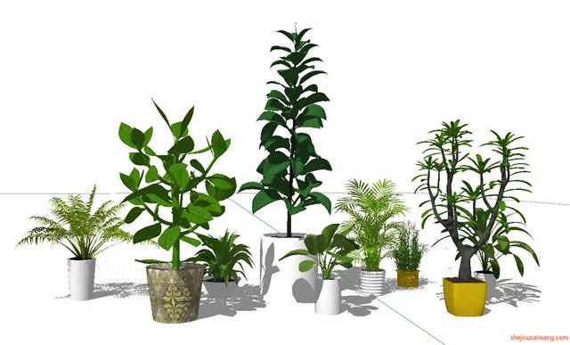 花钵植物盆栽花架SU模型5